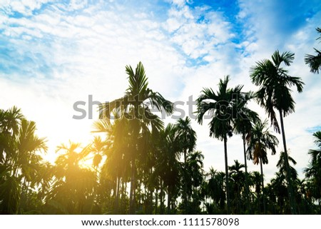 Palm trees on blue sky background . travel, summer, vacation and tropical beach . #1111578098