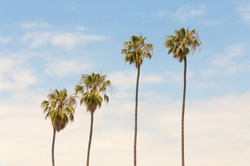 Palm trees on blue sky background, vintage look style