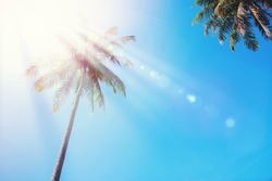 Palm Trees on Blue Sky. Tropical Thailand Landscape. Holiday Travel Background. Light Effect. Journey Concept