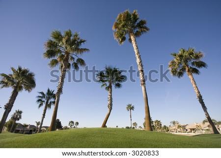 Palm Trees on Luxury Golf Course Phoenix Arizona
