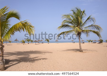 Palm trees on one of the beaches of Saly, in the coastal region of Mbour, Senegal #497564524