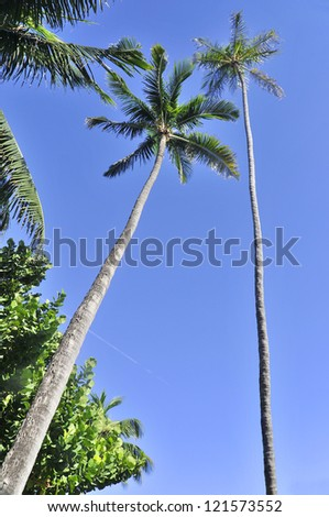 Palm trees on sky blue background