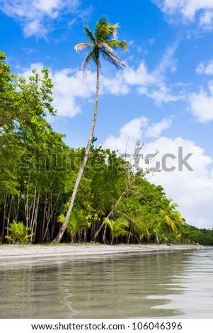 Palm trees on Starfish beach Bocas Del Toro Panama