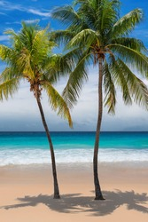 Palm trees on sunny Caribbean beach and turquoise sea in Jamaica paradise island. Summer vacation and tropical beach concept.