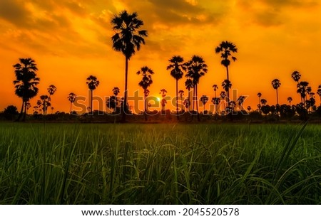 Palm trees on the background of sunset. Sunset palm trees. Palm trees at sunset. Sunset palms silhouettes