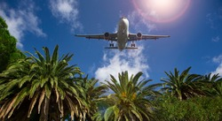 Palm trees on the background of the plane in the sky. Summer traveling concept
