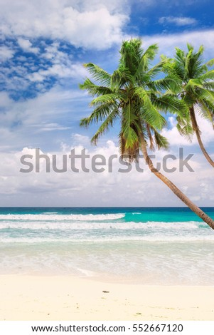 Palm trees on the Beach, vertical.