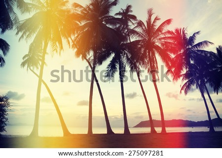 Palm trees on the beach with retro film light leaks, vintage stylized