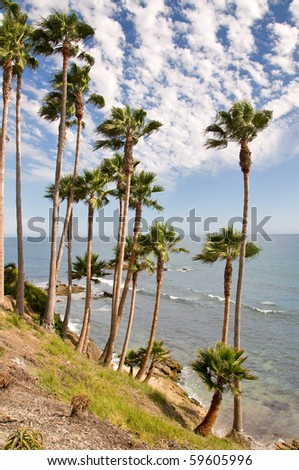 Palm Trees on the Coast of California, USA