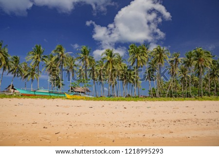 palm trees on the tropical beach of Palawan in the sea of the Philippines in Asia #1218995293