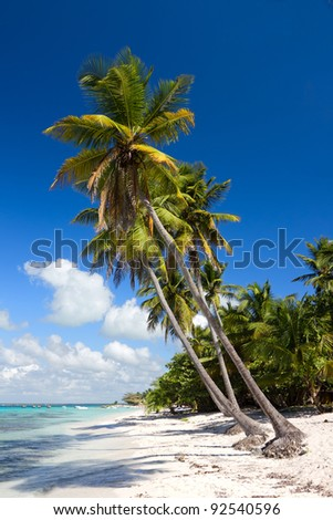 Palm trees on the tropical beach, Saona Island, Caribbean Sea, Dominican Republic