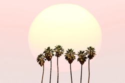 Palm trees on the tropical sunset background