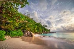 palm trees on tropical beach anse georgette on praslin island - paradise on the seychelles