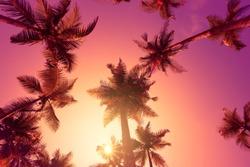 Palm trees on tropical beach at sunrise