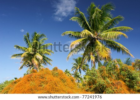 Palm trees on tropical beach, Maupiti, French Polynesia, Society Islands
