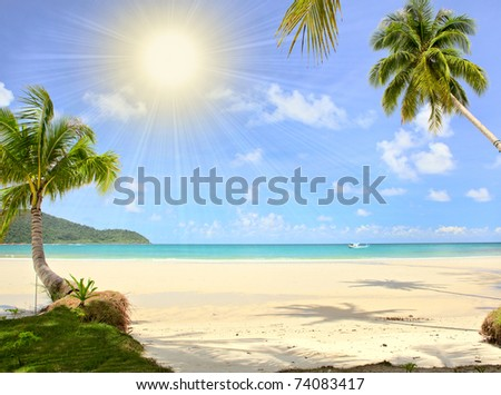 Palm trees on tropical beach under the sun. Exotic escape.