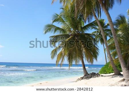 Palm trees on tropical island beach