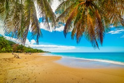 Palm trees over La Perle beach golden shore. Guadeloupe, Caribbean sea