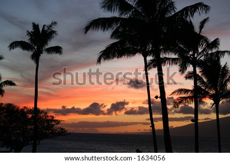 Palm trees set to a colorful Maui sky