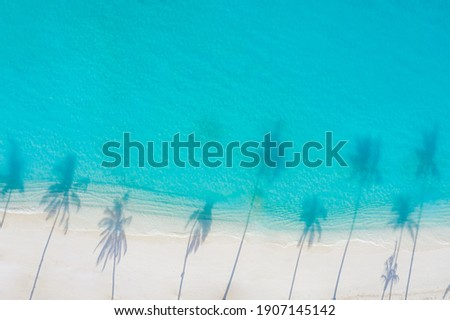 Palm trees shadow on the sandy beach and turquoise ocean from above. Amazing summer nature landscape. Stunning sunny beach scenery, relaxing peaceful and inspirational beach vacation template