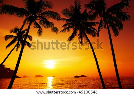 Palm trees silhouette at sunset, Chang island, Thailand - stock photo