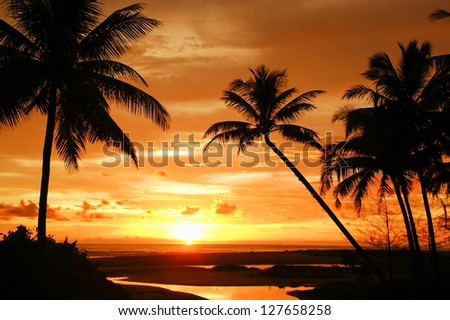 Palm trees silhouette at sunset Thailand
