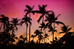 Palm trees silhouette on sunset tropical beach on Hawaii, USA