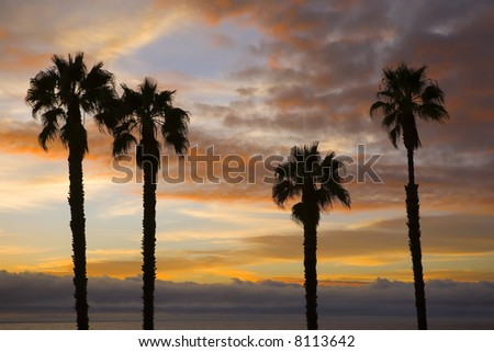 Palm Trees Silhouetted against a Beautiful Sunset