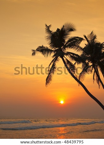 palm trees silhouetted against a sunset over the indian ocean at thalpe in sri lanka