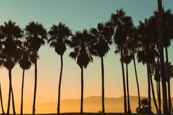 Palm trees silhouetted against the California sunset and mountains