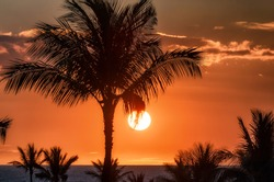 Palm trees silhouettes and orange sunset on tropical island
