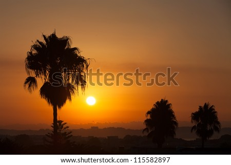 Palm trees silhouettes at sunset in Spain, Costa Dorada
