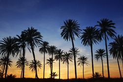 palm trees sunset golden blue sky backlight in mediterranean