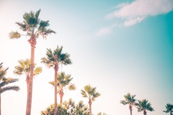 Palm trees uder the rays of the summer sun.