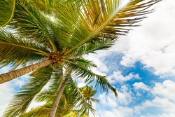 Palm trees under a cloudy sky in Guadeloupe, French west indies. Lesser Antilles, Caribbean sea