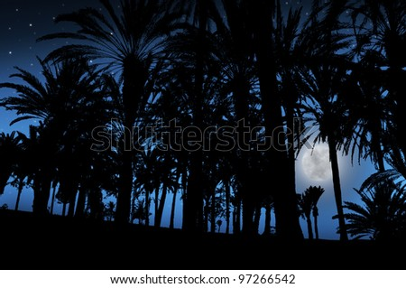 Palm Trees under the moonlight in tropics