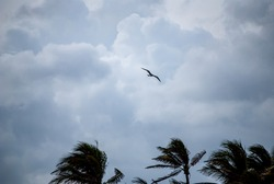 Palm trees with cloudy sky and bird