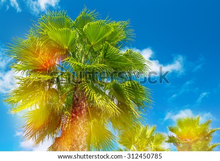 Palm trees with sunny blue sky. Summer holidays background with light leaks and lens flares