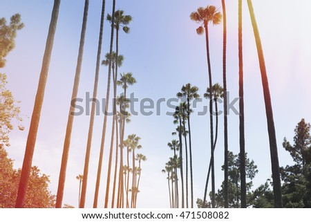 palm trees with vintage effect