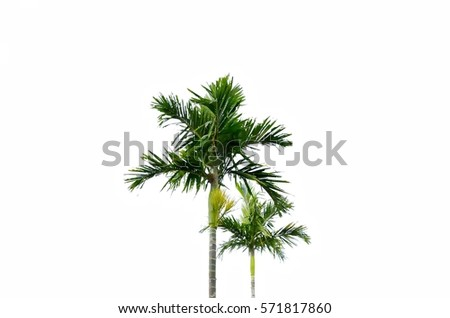 Palm trees with white background. #571817860