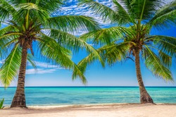 Palm tress at the exotic beach in Dominican Republic