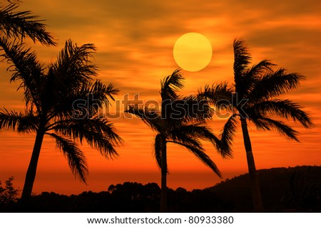 palm with sunset
