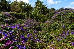 Palmeras y flores en Santa Cruz de Tenerife Espa a frica. Travel Tourism Street Photography