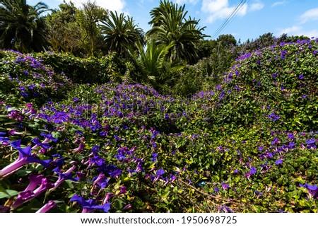 Palmeras y flores en Santa Cruz de Tenerife Espa a frica. Travel Tourism Street Photography Foto stock ©