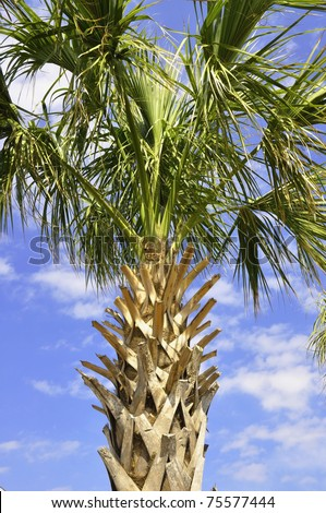 palmetto single women Craigslist provides local classifieds and forums for jobs, housing, for sale, services, local community, and events.