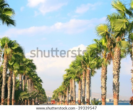 Palms alley in tropics.