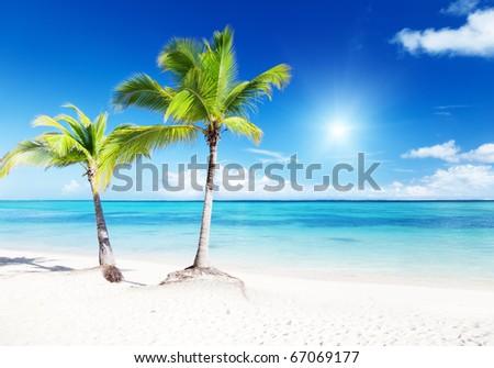 palms and beach