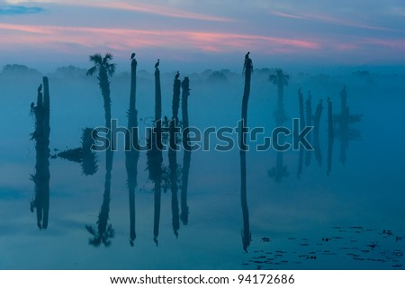 Palms and birds in the foggy dawn at the Ritch Grissom Memorial Wetlands (often referred to as the Viera Wetlands) in Melbourne, Florida