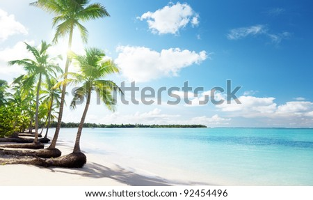 palms and Caribbean beach