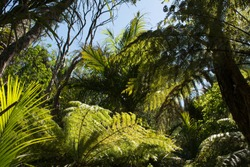 Palms and fern in the wilderness of New Zealand's forests